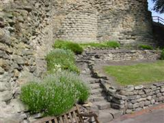Herbs along the stairs at Pontefract Castle